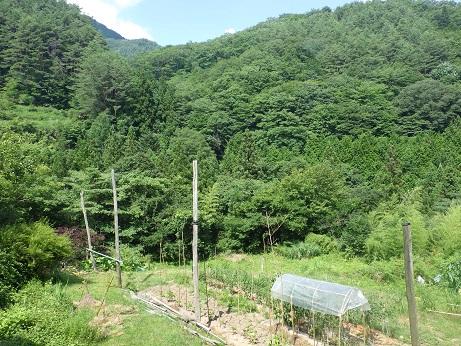 伝統野菜 鈴ヶ沢南蛮 長野県 信州